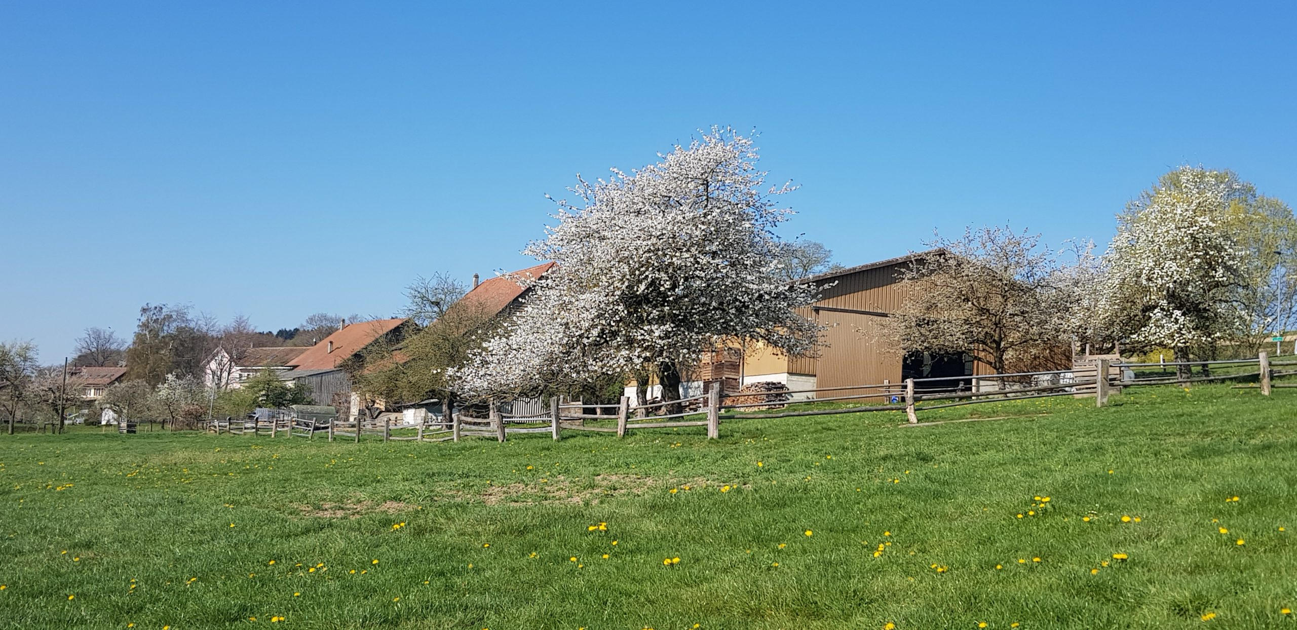 ferme printemps